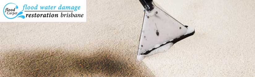 Carpet Mould Damage Removal Brisbane