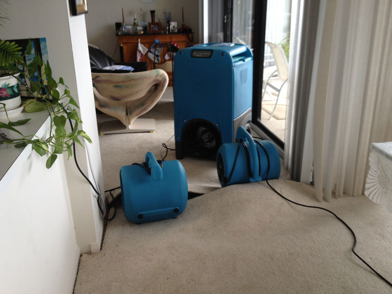 Water Damage Carpet Drying