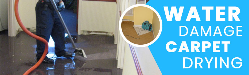 Water Damage Carpet Drying Brisbane