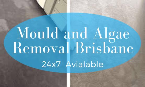 Mould and Algae Cleaning Brisbane